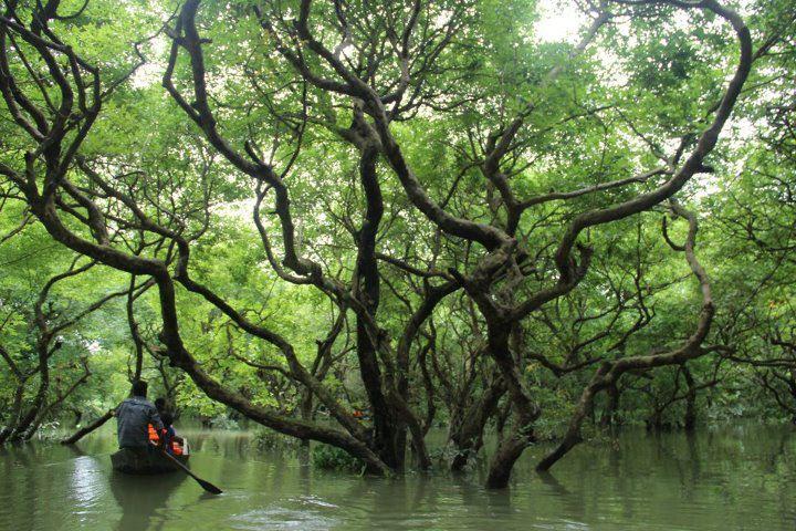 Sylhet Tours   Swamp Forest, Ratargul